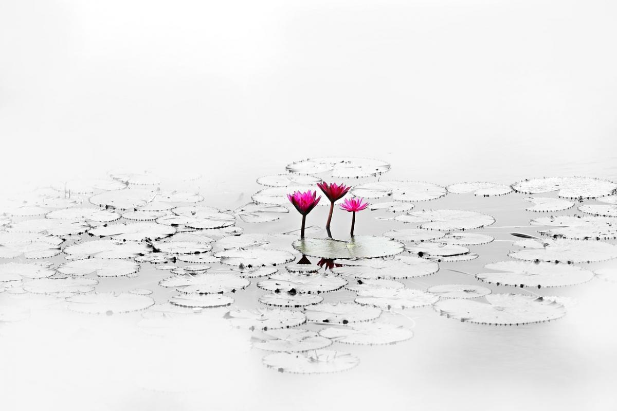 Lotus 1700557 1280